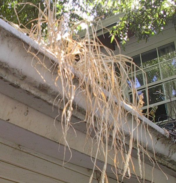 clean the debris from gutters
