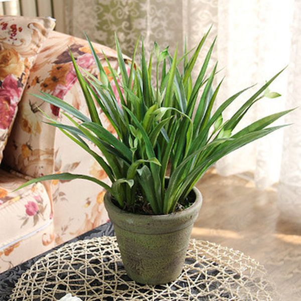 winter home décor with plants (3)