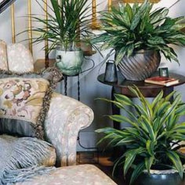 winter home décor with plants (4)