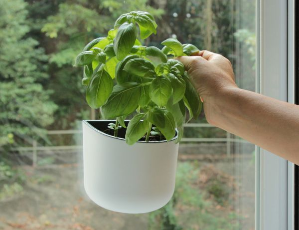 Okidome Eden Suction Planter 1