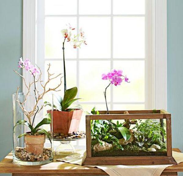 indoor-plant-display-ideas-3
