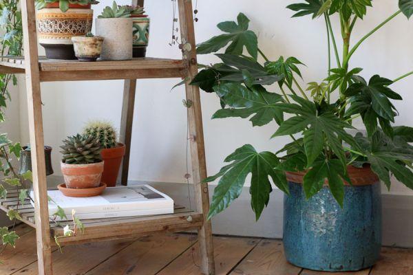 indoor-plant-display-ideas-4
