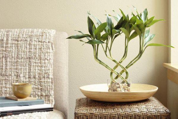indoor-plant-display-ideas-5