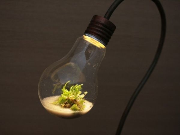 lamp-terrarium