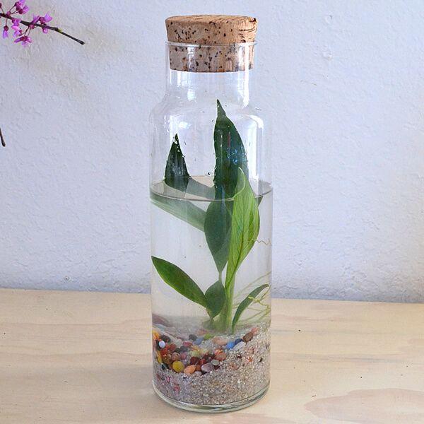 water-terrariums