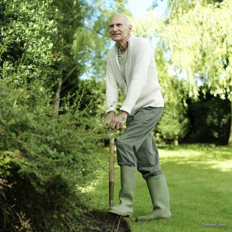 maintaining trees in your yard