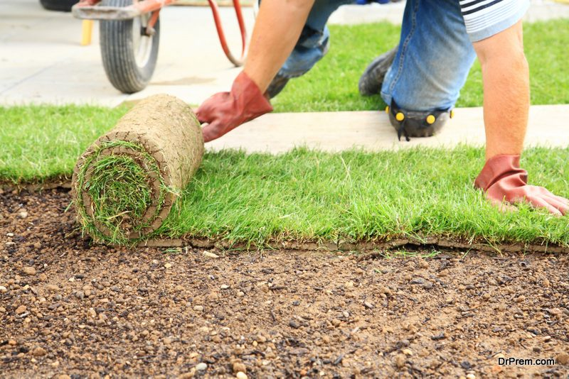 investing-in-a-turf-lawn