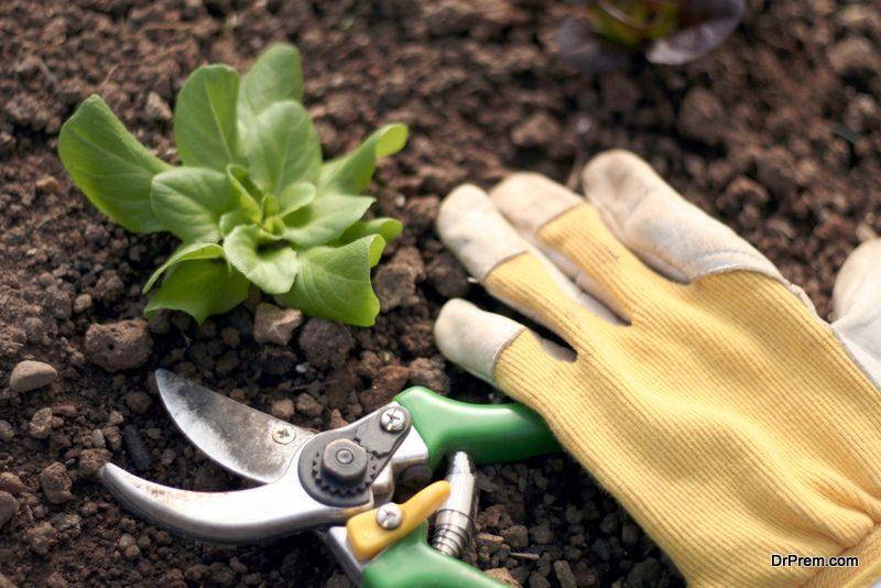 harvest the garden