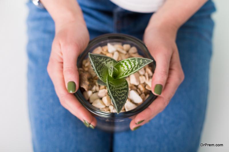 Real-Benefits-Of-Houseplants