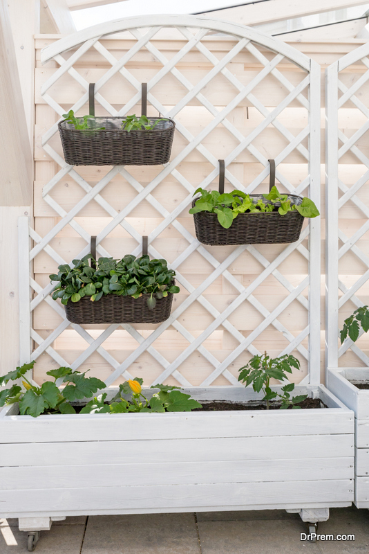Vertical-Lettuce-Planter-Idea.