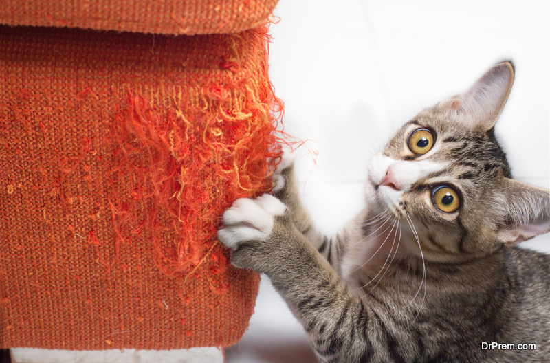cat- proofing your furniture