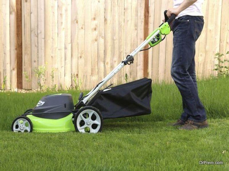 Make Your Lawn Look Like a Million Bucks