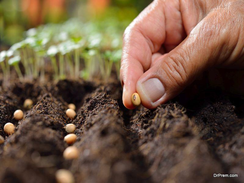 disease-resistant seeds