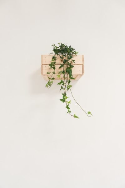 Make vertical gardens