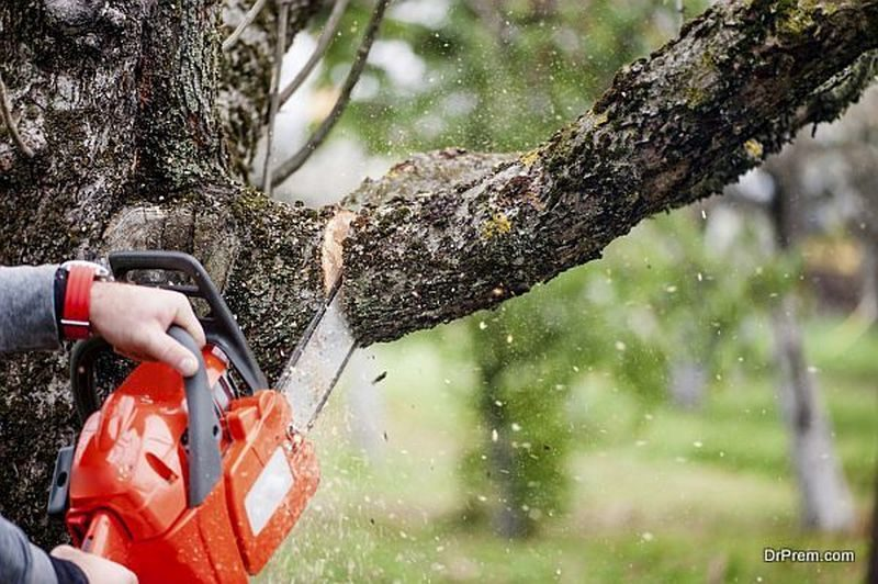 Tree Limb Removal