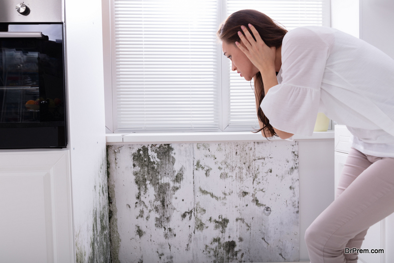 Prevent-Mold-at-Your-Property