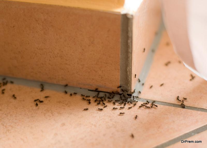 Eliminate Little Black Ants