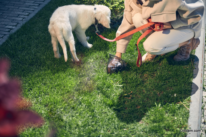 Dog poop may frequently accumulate on the lawn