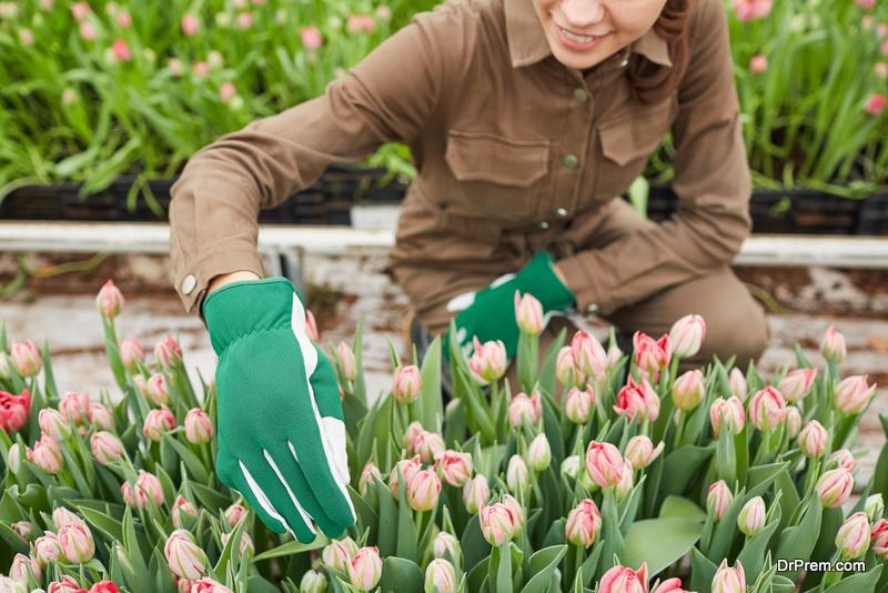 Grow-Tulips-in-your-home-garden