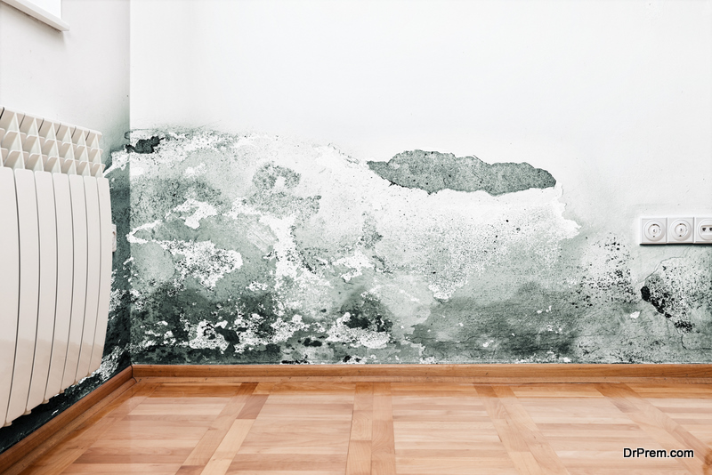 mold issues
