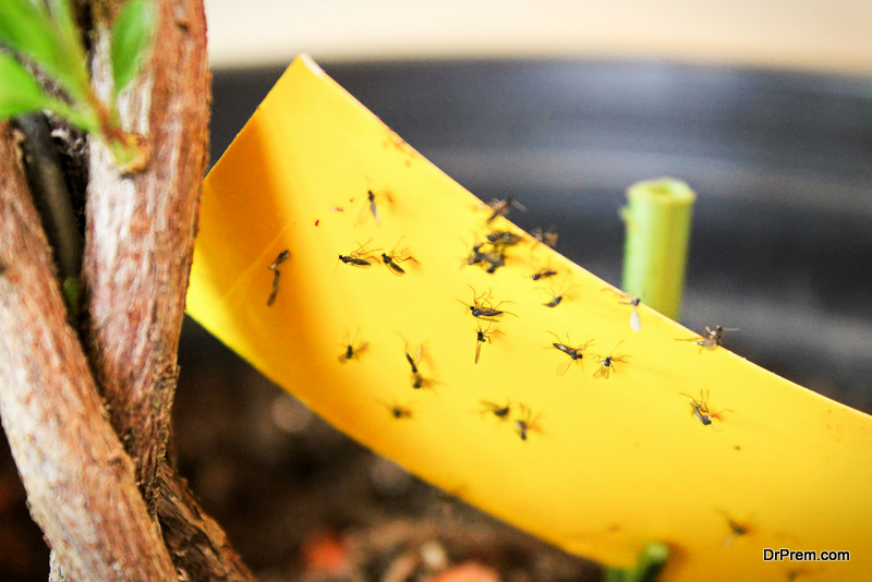 sticky boards for insects