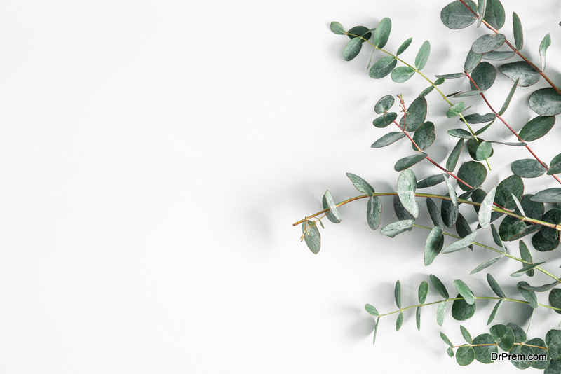 Eucalyptus in Your Shower space