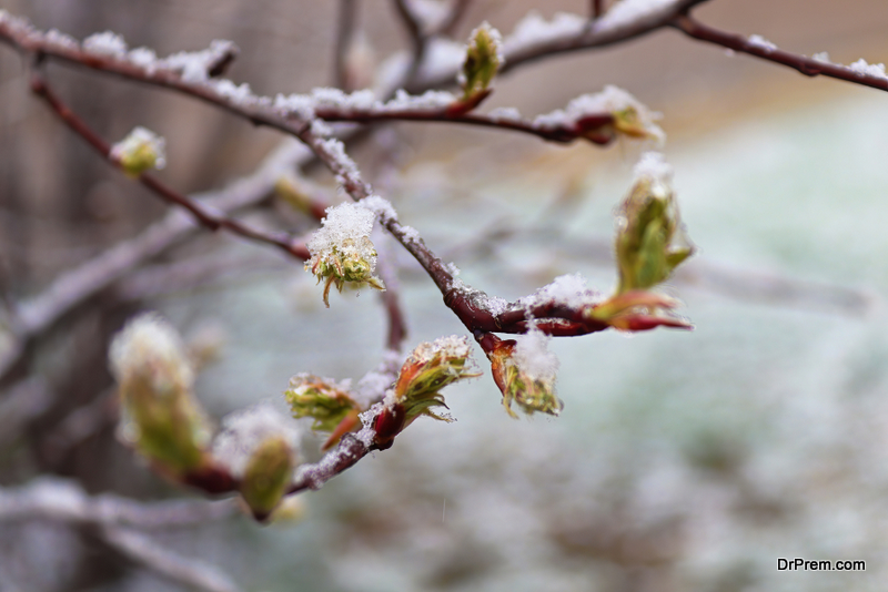 Late Frost Kill a Tree