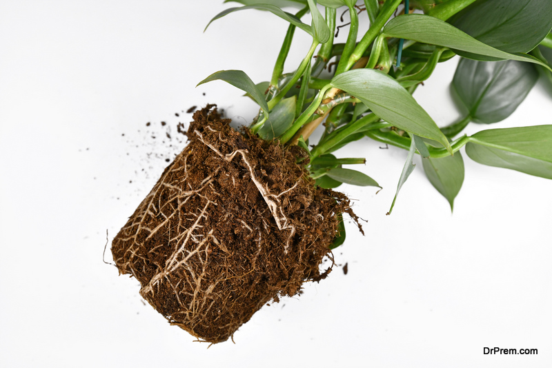 Maintain Healthy Roots of Your Indoor Plants