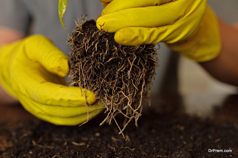 Root-bound