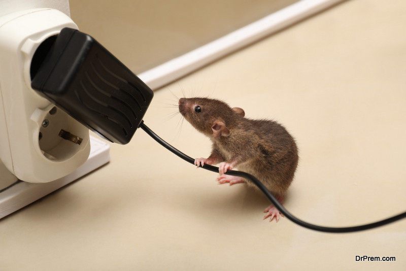 Ways to Keep Mice Out Of Your House