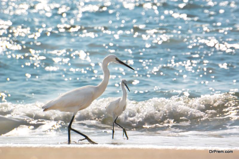 Wildlife-of-florida