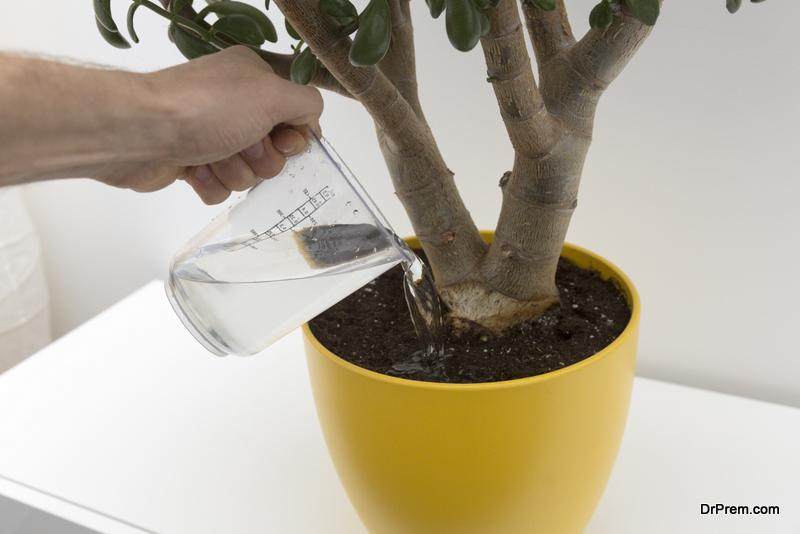 watering indoor plant