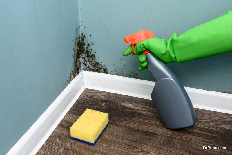 Removing  Mold from Home