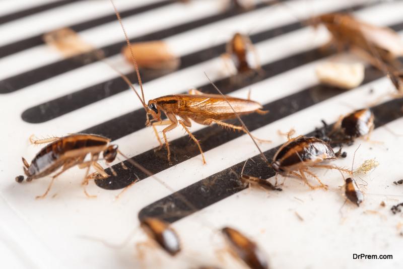 Spotting a cockroach