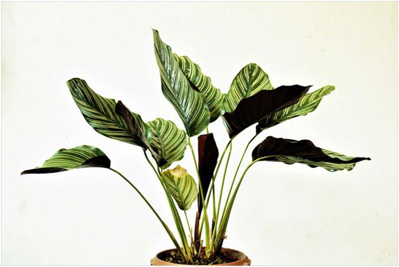 Indoor Plants in Greenhouses